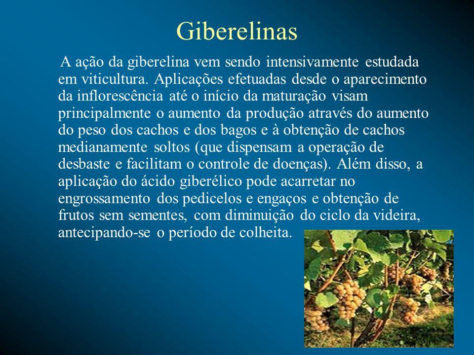 Giberelinas A ação da giberelina vem sendo intensivamente estudada em viticultura. Aplicações efetuadas desde o aparecimento da inflorescência até o i