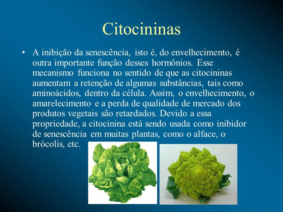 Citocininas A inibição da senescência, isto é, do envelhecimento, é outra importante função desses hormônios.