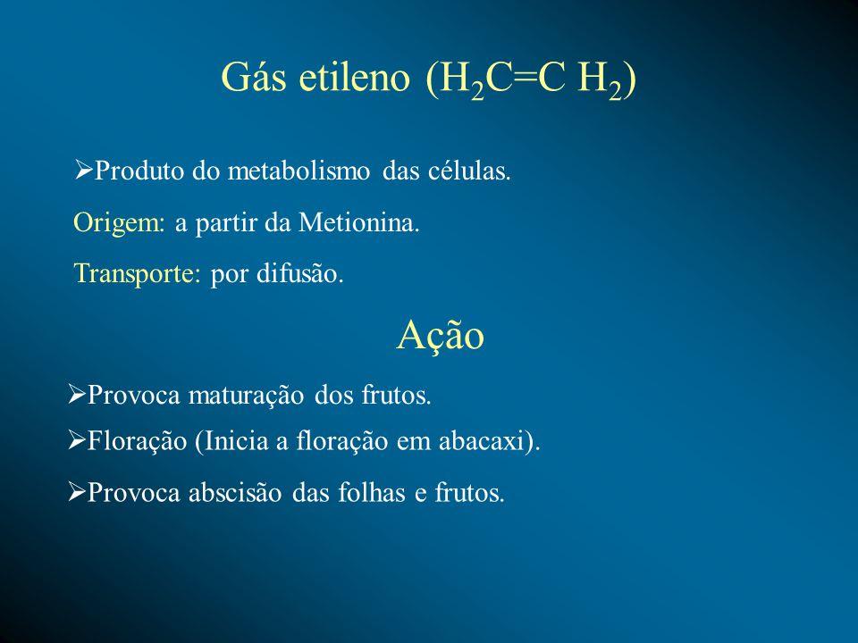 Gás etileno (H 2 C=C H 2 ) Produto do metabolismo das células. Origem: a partir da Metionina. Transporte: por difusão. Ação Provoca maturação dos frut