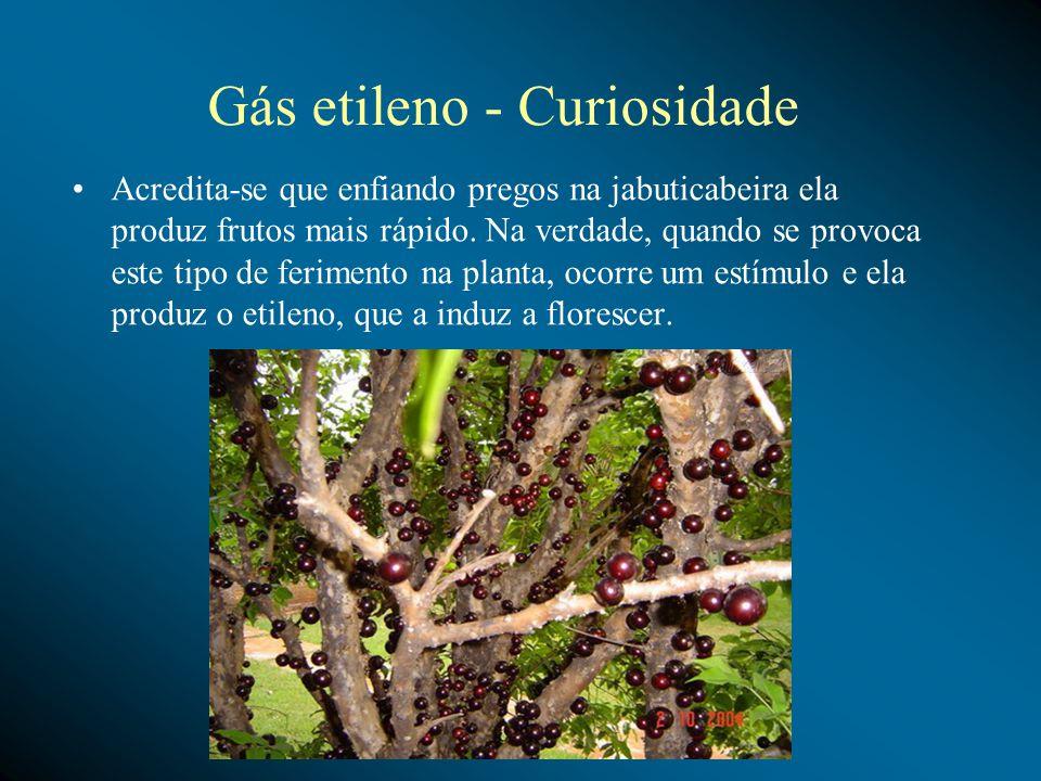 Gás etileno - Curiosidade Acredita-se que enfiando pregos na jabuticabeira ela produz frutos mais rápido. Na verdade, quando se provoca este tipo de f
