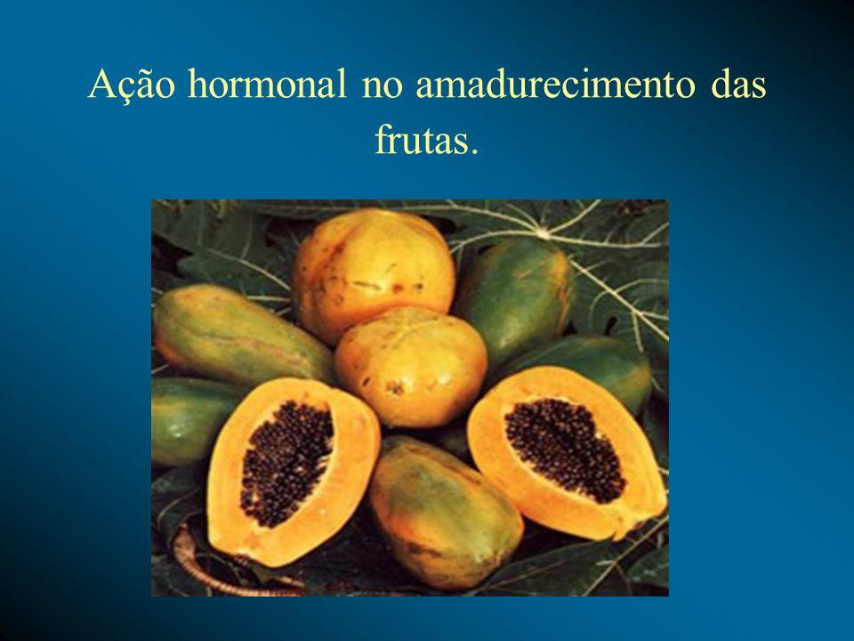 Ação hormonal no amadurecimento das frutas.