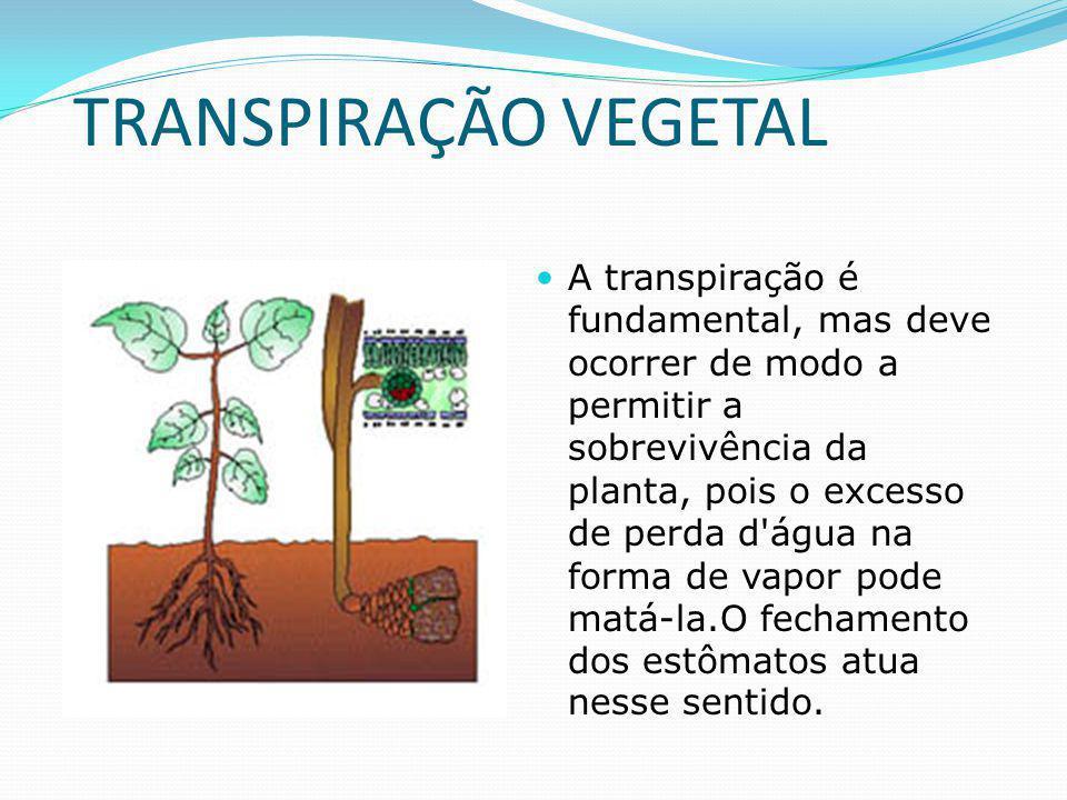 TRANSPIRAÇÃO VEGETAL A transpiração é fundamental, mas deve ocorrer de modo a permitir a sobrevivência da planta, pois o excesso de perda d água na forma de vapor pode matá-la.O fechamento dos estômatos atua nesse sentido.