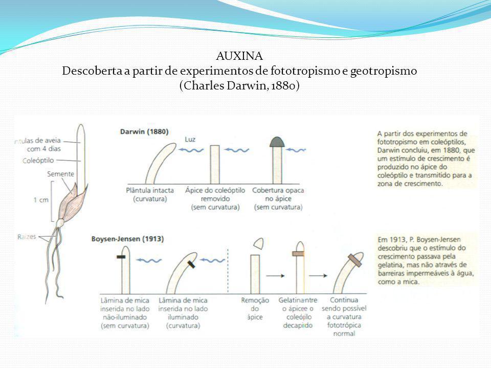 AUXINA Descoberta a partir de experimentos de fototropismo e geotropismo (Charles Darwin, 1880)