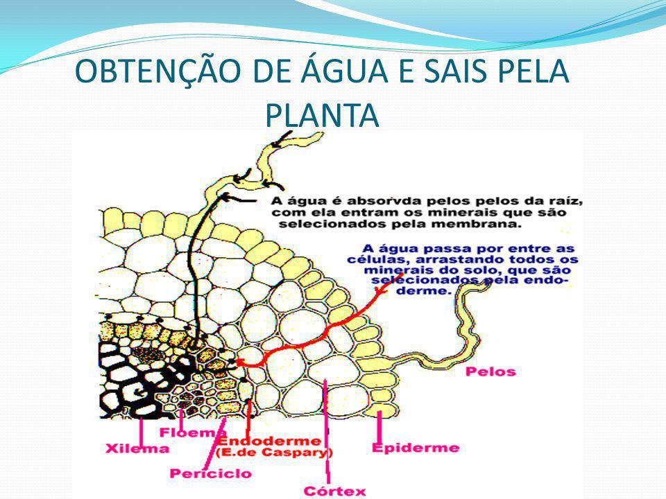 4 - as auxinas provocam as curvaturas dos vegetais causadas pela gravidade(geotropismo) e pela luz (fototropismo).