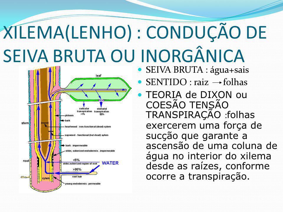 XILEMA(LENHO) : CONDUÇÃO DE SEIVA BRUTA OU INORGÂNICA SEIVA BRUTA : água+sais SENTIDO : raiz folhas TEORIA de DIXON ou COESÃO TENSÃO TRANSPIRAÇÃO : folhas exercerem uma força de sucção que garante a ascensão de uma coluna de água no interior do xilema desde as raízes, conforme ocorre a transpiração.