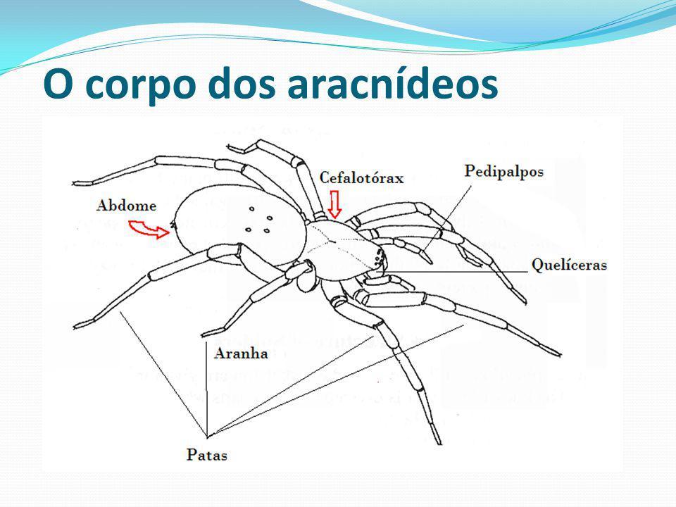 O corpo dos aracnídeos