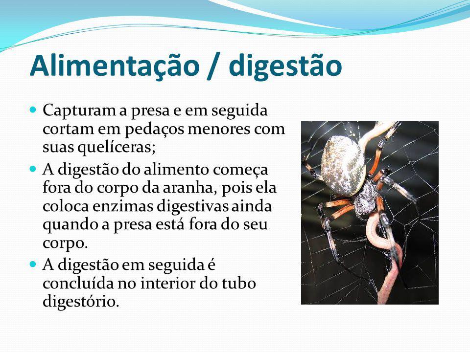 Alimentação / digestão Capturam a presa e em seguida cortam em pedaços menores com suas quelíceras; A digestão do alimento começa fora do corpo da ara