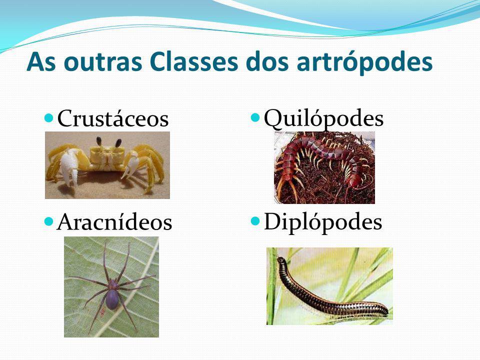 As outras Classes dos artrópodes Crustáceos Aracnídeos Quilópodes Diplópodes