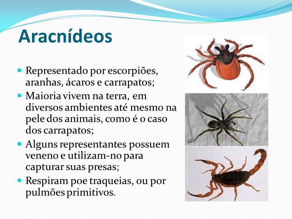 Aracnídeos Representado por escorpiões, aranhas, ácaros e carrapatos; Maioria vivem na terra, em diversos ambientes até mesmo na pele dos animais, com
