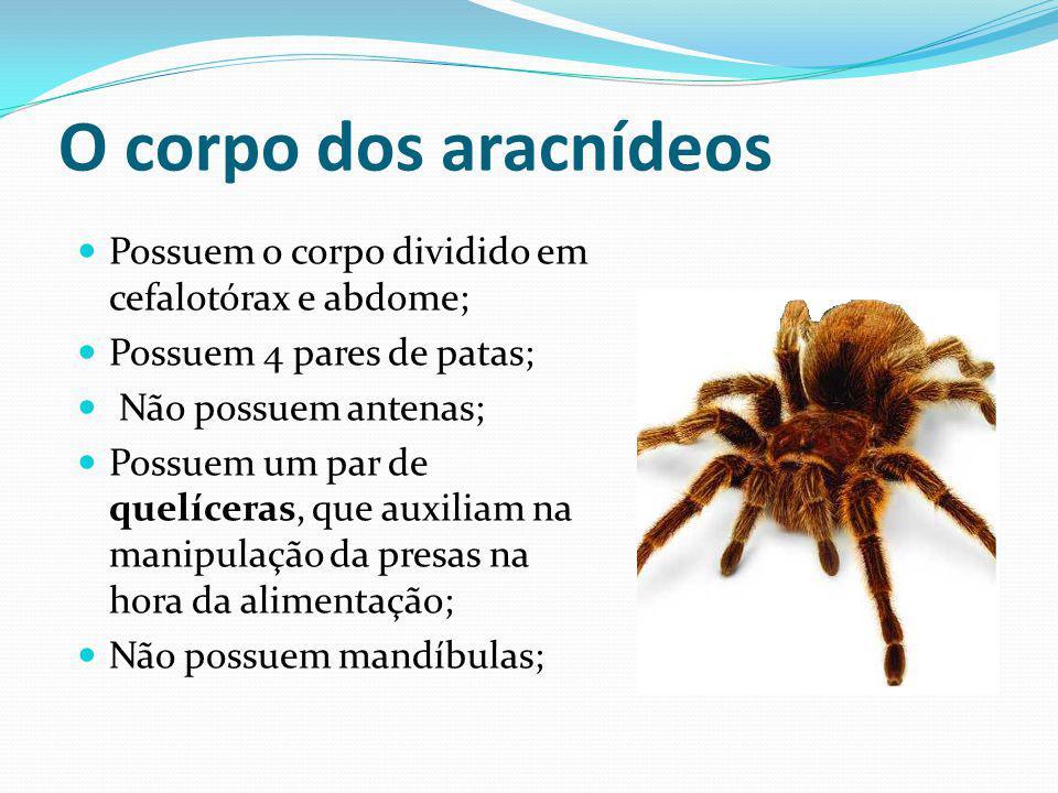 O corpo dos aracnídeos Possuem o corpo dividido em cefalotórax e abdome; Possuem 4 pares de patas; Não possuem antenas; Possuem um par de quelíceras,