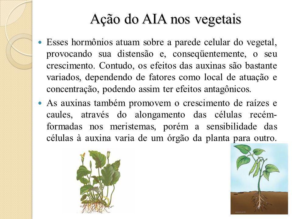 Ação do AIA nos vegetais Esses hormônios atuam sobre a parede celular do vegetal, provocando sua distensão e, conseqüentemente, o seu crescimento.