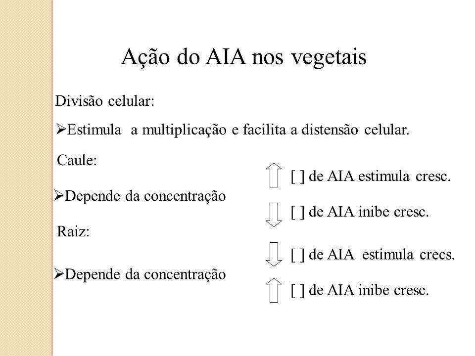Ação do AIA nos vegetais Esses hormônios atuam sobre a parede celular do vegetal, provocando sua distensão e, conseqüentemente, o seu crescimento. Con