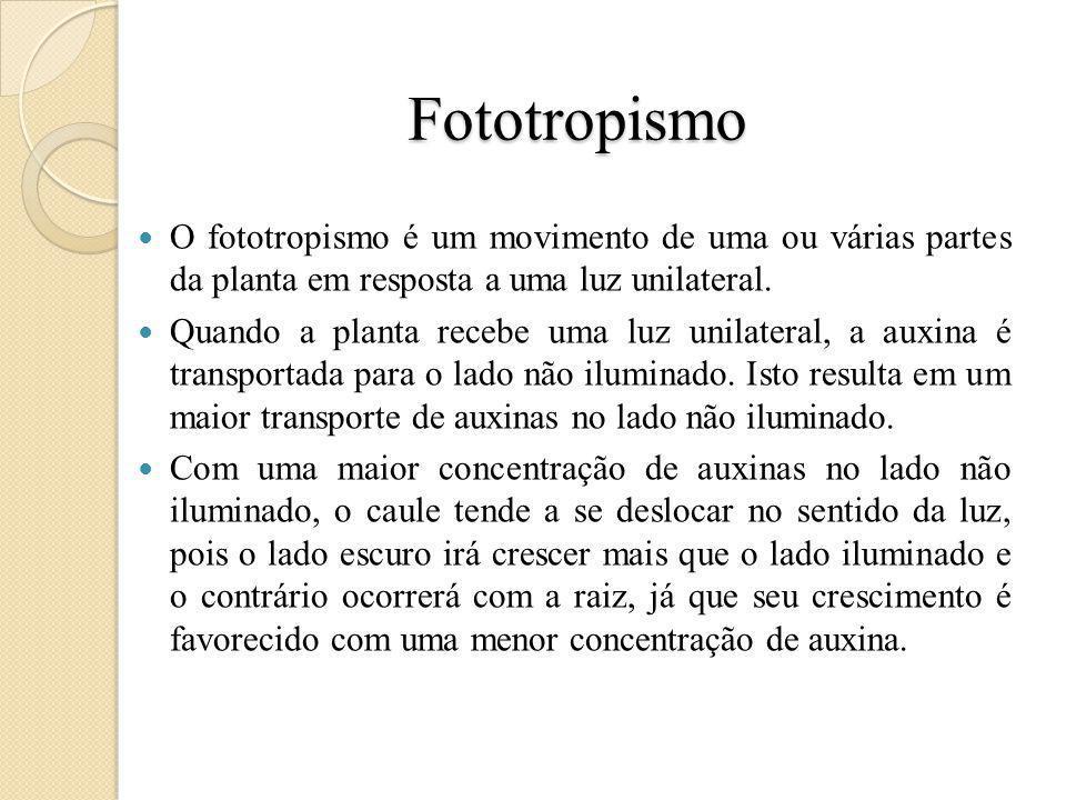 Fototropismo O fototropismo é um movimento de uma ou várias partes da planta em resposta a uma luz unilateral.