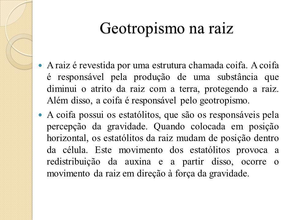 Geotropismo
