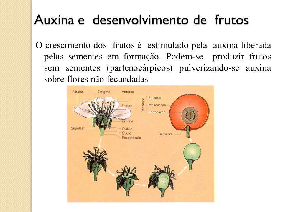 Auxina e desenvolvimento de frutos Auxina e desenvolvimento de frutos O crescimento dos frutos é estimulado pela auxina liberada pelas sementes em formação.