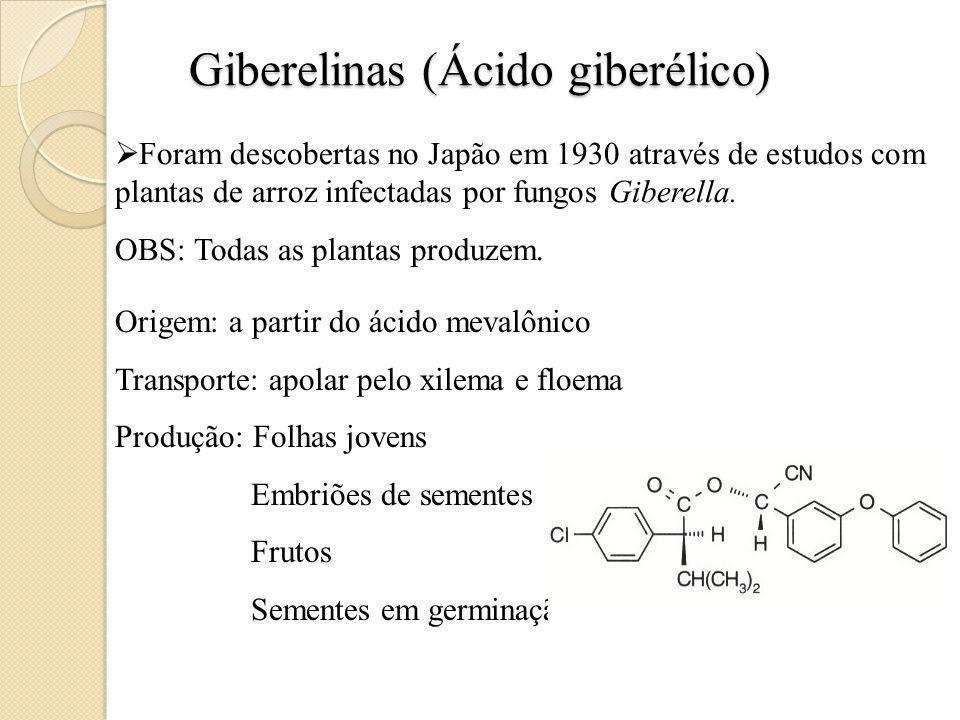 Giberelinas (Ácido giberélico) Foram descobertas no Japão em 1930 através de estudos com plantas de arroz infectadas por fungos Giberella.