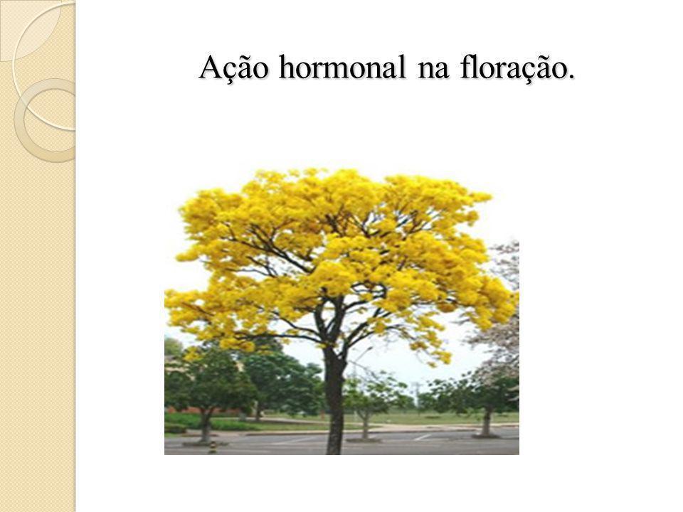 Ação hormonal na floração.