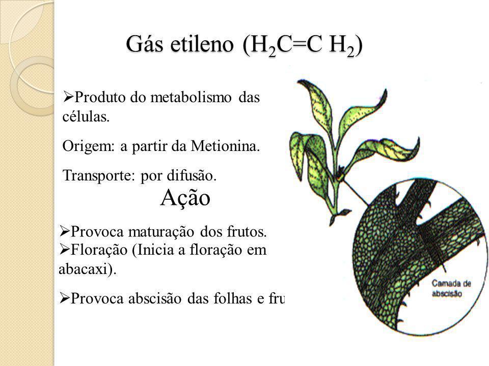 Gás etileno (H 2 C=C H 2 ) Produto do metabolismo das células.