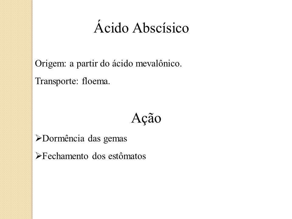 Ácido Abscísico Origem: a partir do ácido mevalônico.