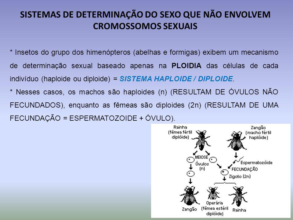 SISTEMAS DE DETERMINAÇÃO DO SEXO QUE NÃO ENVOLVEM CROMOSSOMOS SEXUAIS * Insetos do grupo dos himenópteros (abelhas e formigas) exibem um mecanismo de determinação sexual baseado apenas na PLOIDIA das células de cada indivíduo (haploide ou diploide) = SISTEMA HAPLOIDE / DIPLOIDE.