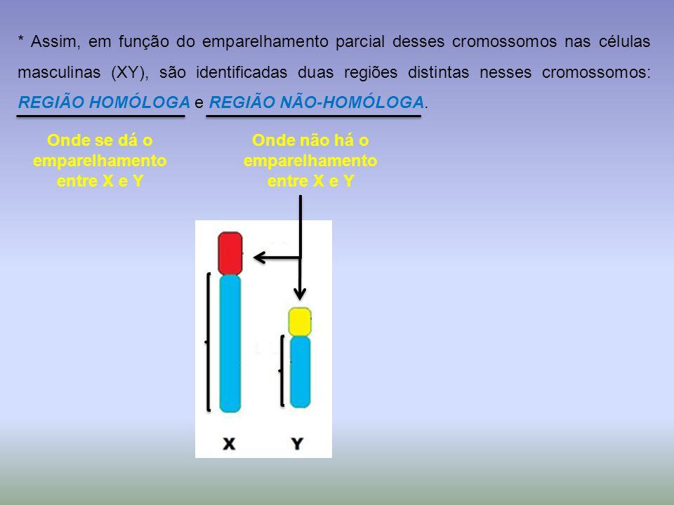 * Assim, em função do emparelhamento parcial desses cromossomos nas células masculinas (XY), são identificadas duas regiões distintas nesses cromossomos: REGIÃO HOMÓLOGA e REGIÃO NÃO-HOMÓLOGA.
