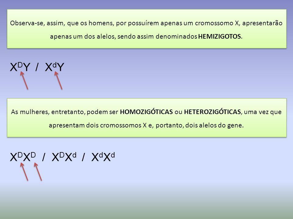 X D X D / X D X d / X d X d X D Y / X d Y Observa-se, assim, que os homens, por possuírem apenas um cromossomo X, apresentarão apenas um dos alelos, sendo assim denominados HEMIZIGOTOS.
