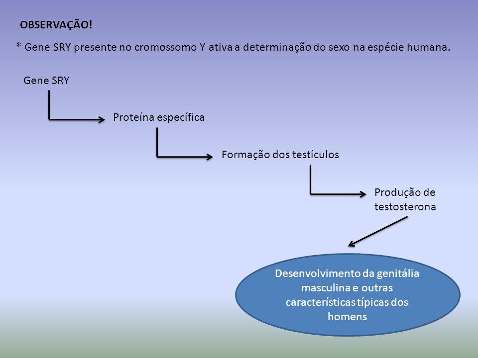 OBSERVAÇÃO.* Gene SRY presente no cromossomo Y ativa a determinação do sexo na espécie humana.