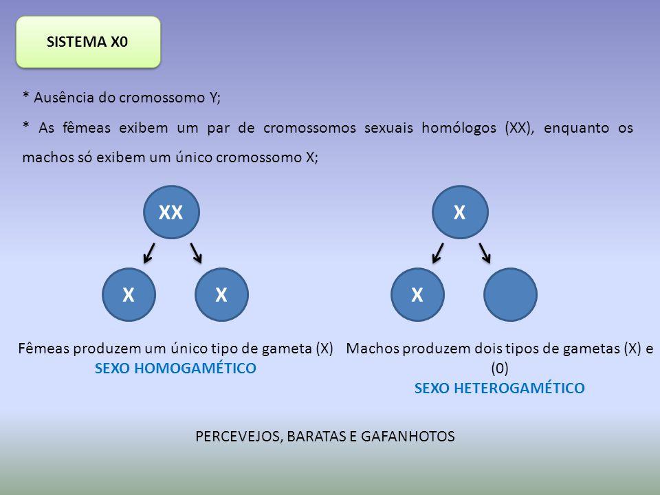 SISTEMA X0 * Ausência do cromossomo Y; * As fêmeas exibem um par de cromossomos sexuais homólogos (XX), enquanto os machos só exibem um único cromossomo X; XX XX X X Fêmeas produzem um único tipo de gameta (X) SEXO HOMOGAMÉTICO Machos produzem dois tipos de gametas (X) e (0) SEXO HETEROGAMÉTICO PERCEVEJOS, BARATAS E GAFANHOTOS