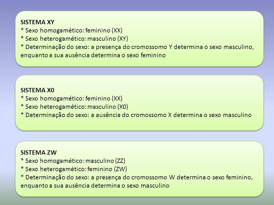 SISTEMA XY * Sexo homogamético: feminino (XX) * Sexo heterogamético: masculino (XY) * Determinação do sexo: a presença do cromossomo Y determina o sexo masculino, enquanto a sua ausência determina o sexo feminino SISTEMA XY * Sexo homogamético: feminino (XX) * Sexo heterogamético: masculino (XY) * Determinação do sexo: a presença do cromossomo Y determina o sexo masculino, enquanto a sua ausência determina o sexo feminino SISTEMA X0 * Sexo homogamético: feminino (XX) * Sexo heterogamético: masculino (X0) * Determinação do sexo: a ausência do cromossomo X determina o sexo masculino SISTEMA X0 * Sexo homogamético: feminino (XX) * Sexo heterogamético: masculino (X0) * Determinação do sexo: a ausência do cromossomo X determina o sexo masculino SISTEMA ZW * Sexo homogamético: masculino (ZZ) * Sexo heterogamético: feminino (ZW) * Determinação do sexo: a presença do cromossomo W determina o sexo feminino, enquanto a sua ausência determina o sexo masculino SISTEMA ZW * Sexo homogamético: masculino (ZZ) * Sexo heterogamético: feminino (ZW) * Determinação do sexo: a presença do cromossomo W determina o sexo feminino, enquanto a sua ausência determina o sexo masculino