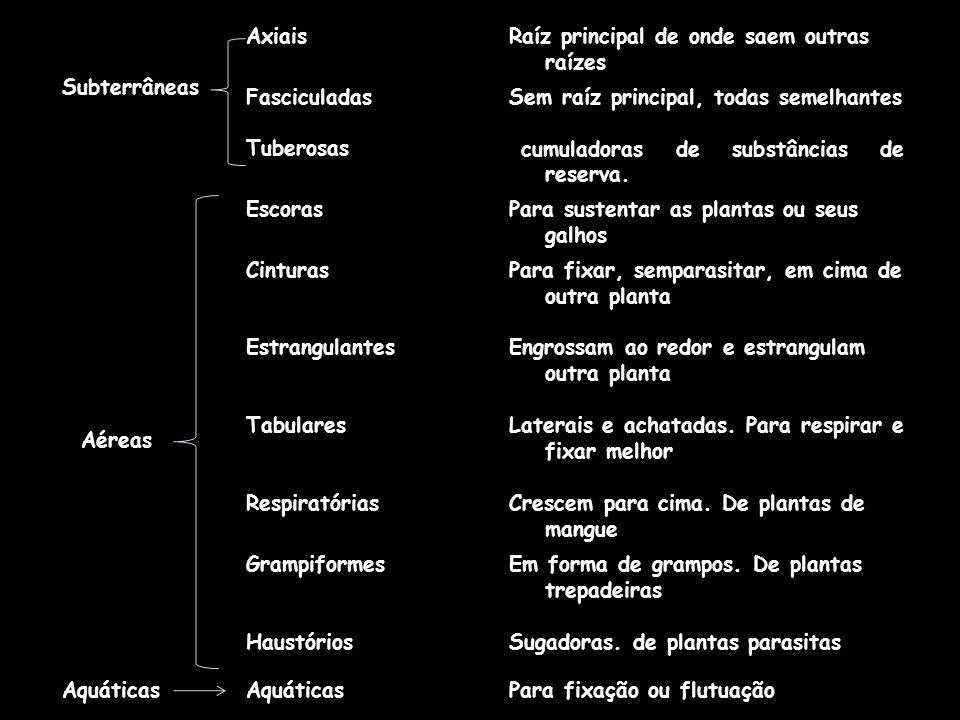 água e minerais dissolvidos; Acumular nutrientes e fixar a planta