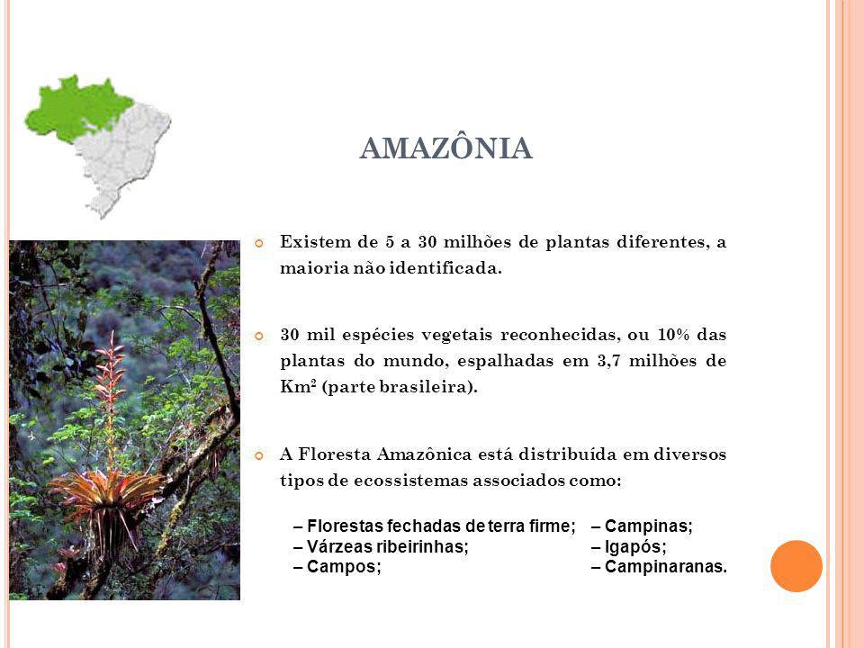 AMAZÔNIA Existem de 5 a 30 milhões de plantas diferentes, a maioria não identificada. 30 mil espécies vegetais reconhecidas, ou 10% das plantas do mun
