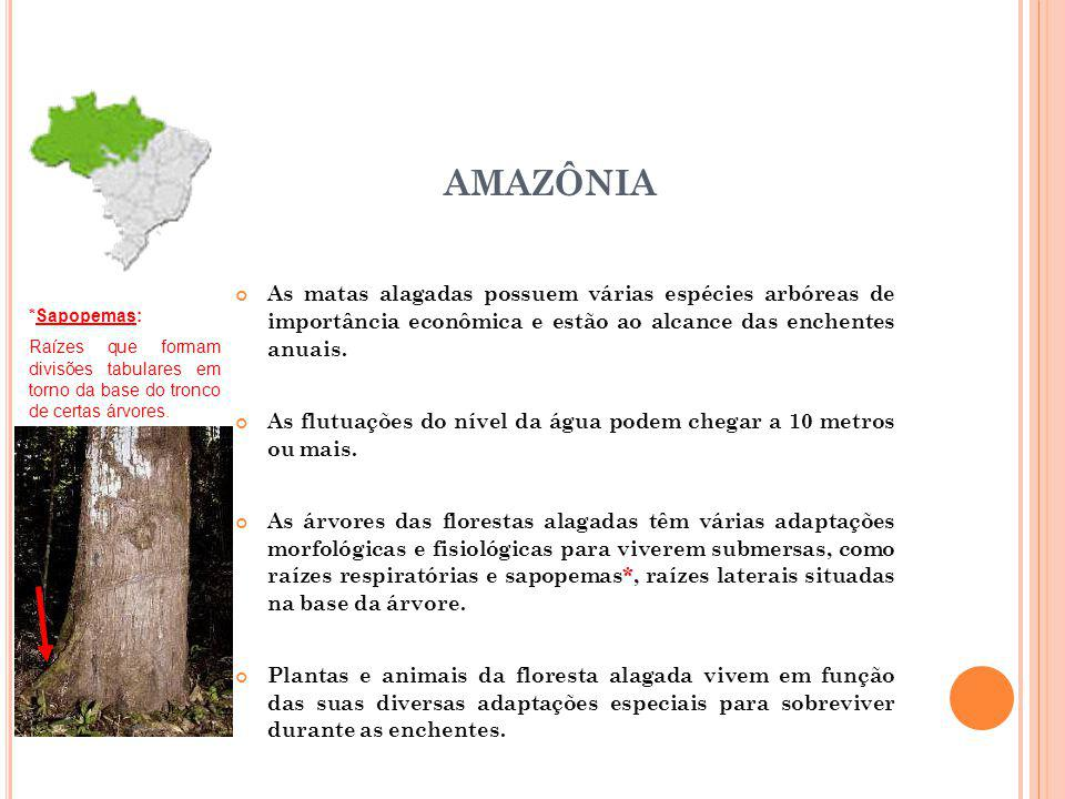 AMAZÔNIA As matas alagadas possuem várias espécies arbóreas de importância econômica e estão ao alcance das enchentes anuais. As flutuações do nível d