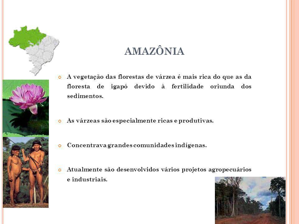 AMAZÔNIA A vegetação das florestas de várzea é mais rica do que as da floresta de igapó devido à fertilidade oriunda dos sedimentos. As várzeas são es