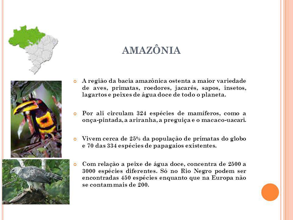 AMAZÔNIA A região da bacia amazônica ostenta a maior variedade de aves, primatas, roedores, jacarés, sapos, insetos, lagartos e peixes de água doce de todo o planeta.
