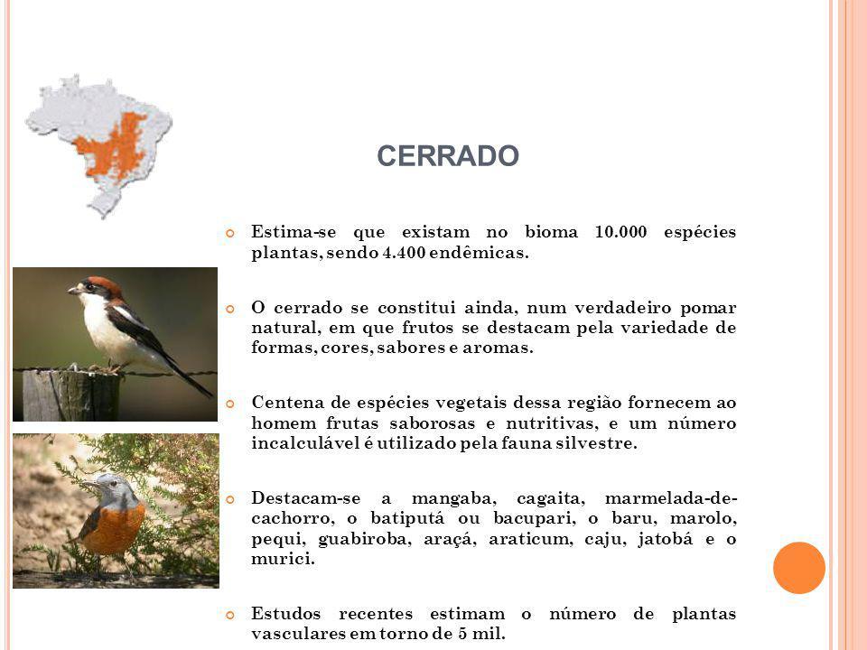 Estima-se que existam no bioma 10.000 espécies plantas, sendo 4.400 endêmicas.