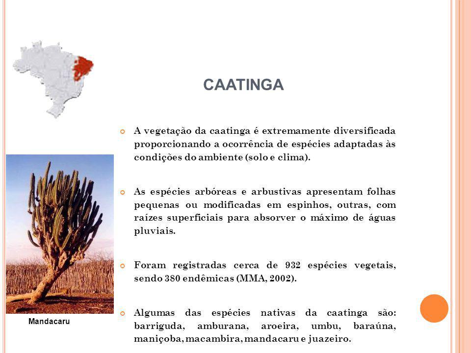 A vegetação da caatinga é extremamente diversificada proporcionando a ocorrência de espécies adaptadas às condições do ambiente (solo e clima). As esp