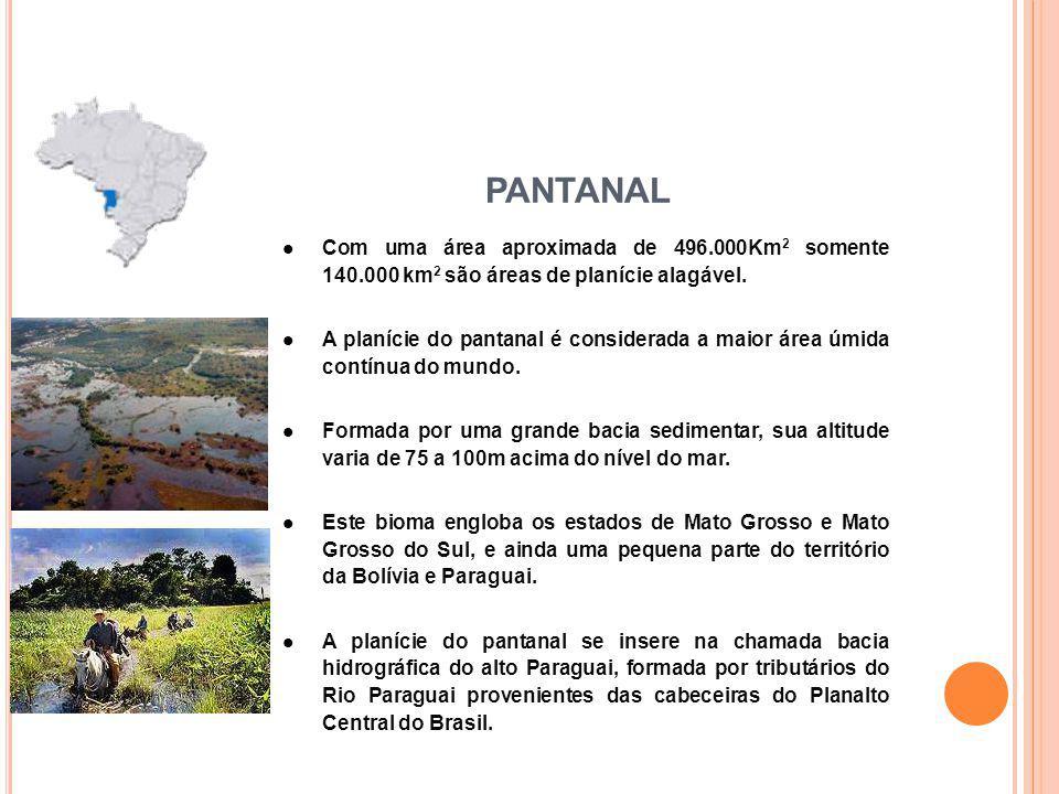 Com uma área aproximada de 496.000Km 2 somente 140.000 km 2 são áreas de planície alagável. A planície do pantanal é considerada a maior área úmida co