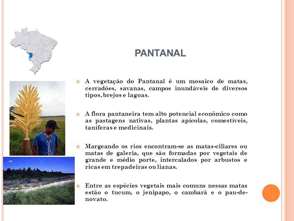 A vegetação do Pantanal é um mosaico de matas, cerradões, savanas, campos inundáveis de diversos tipos, brejos e lagoas. A flora pantaneira tem alto p