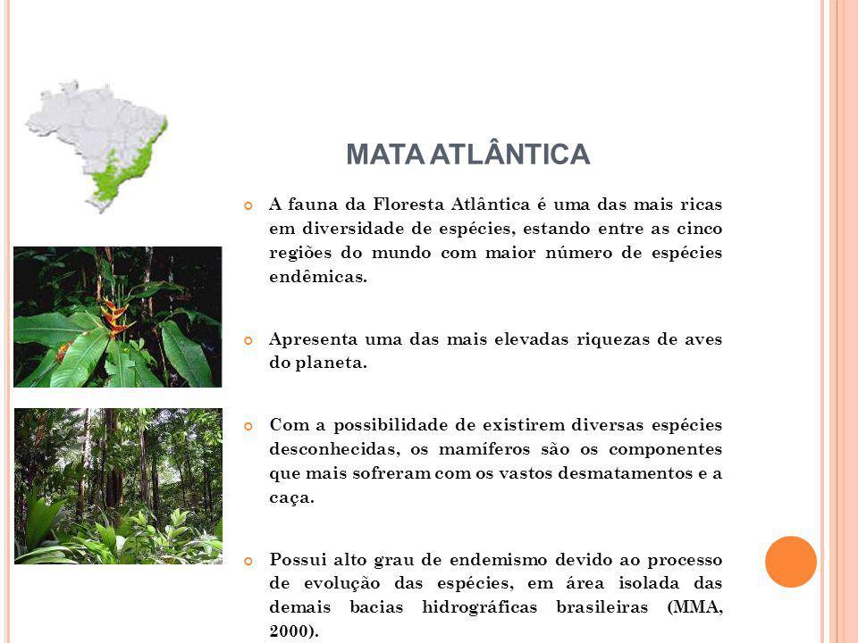 A fauna da Floresta Atlântica é uma das mais ricas em diversidade de espécies, estando entre as cinco regiões do mundo com maior número de espécies en