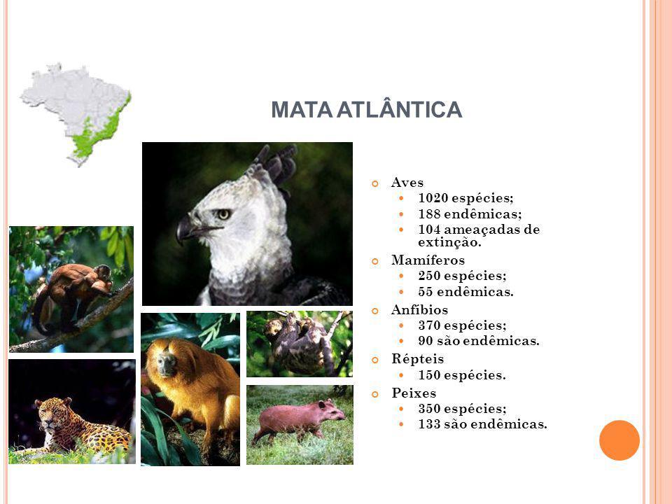 Aves 1020 espécies; 188 endêmicas; 104 ameaçadas de extinção.