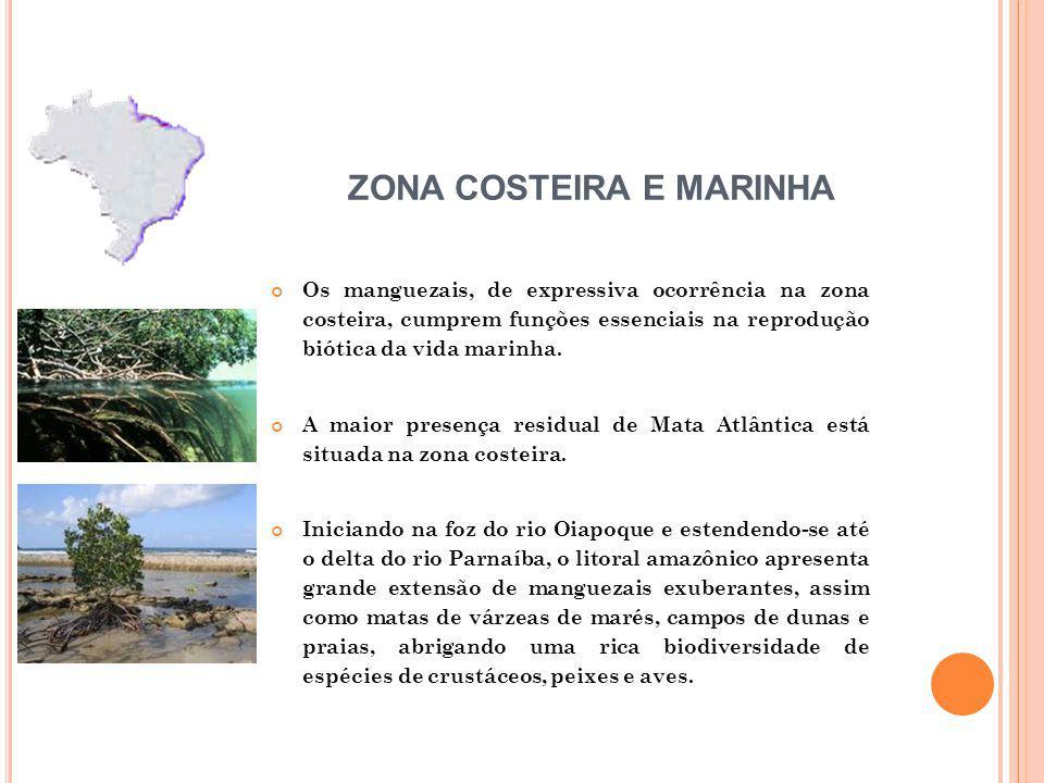 Os manguezais, de expressiva ocorrência na zona costeira, cumprem funções essenciais na reprodução biótica da vida marinha.