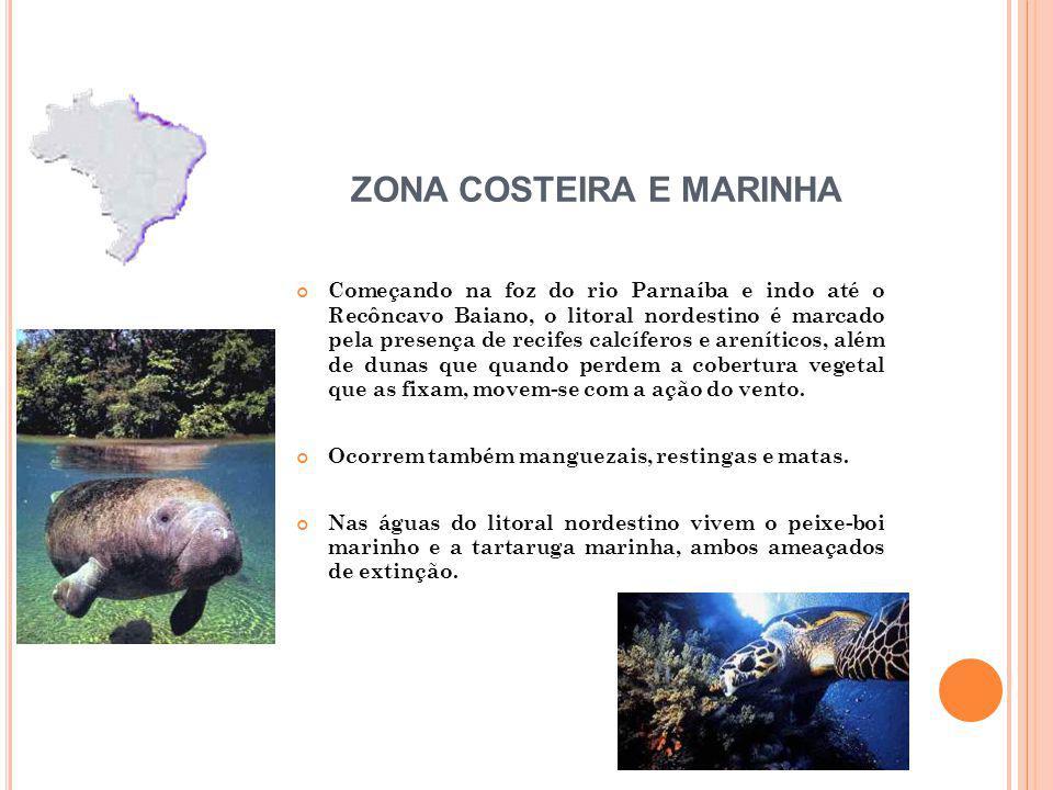 Começando na foz do rio Parnaíba e indo até o Recôncavo Baiano, o litoral nordestino é marcado pela presença de recifes calcíferos e areníticos, além