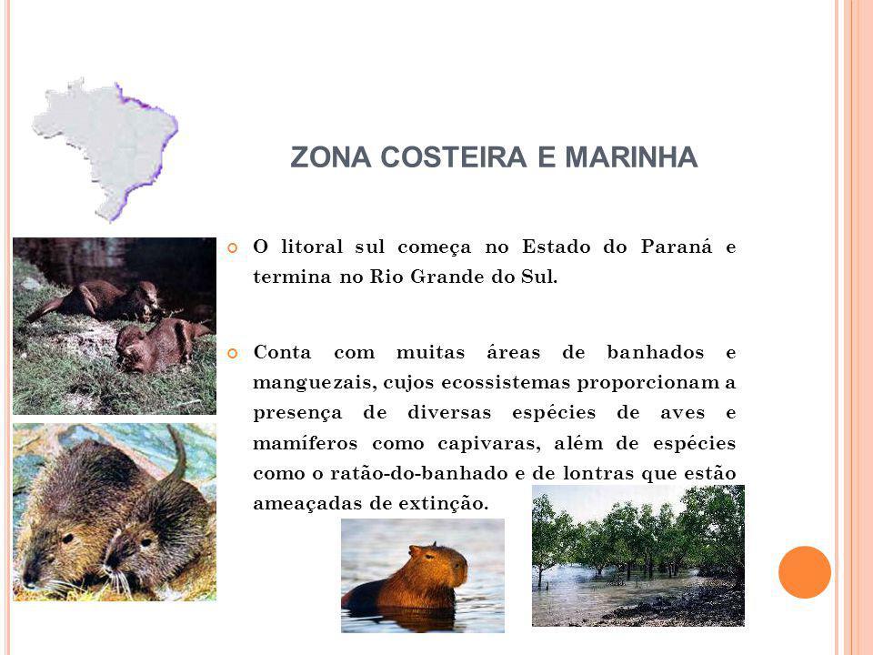 O litoral sul começa no Estado do Paraná e termina no Rio Grande do Sul. Conta com muitas áreas de banhados e manguezais, cujos ecossistemas proporcio