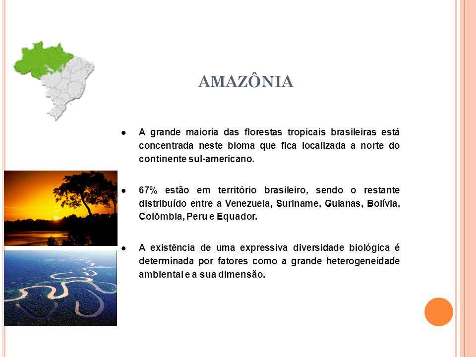 AMAZÔNIA A grande maioria das florestas tropicais brasileiras está concentrada neste bioma que fica localizada a norte do continente sul-americano.