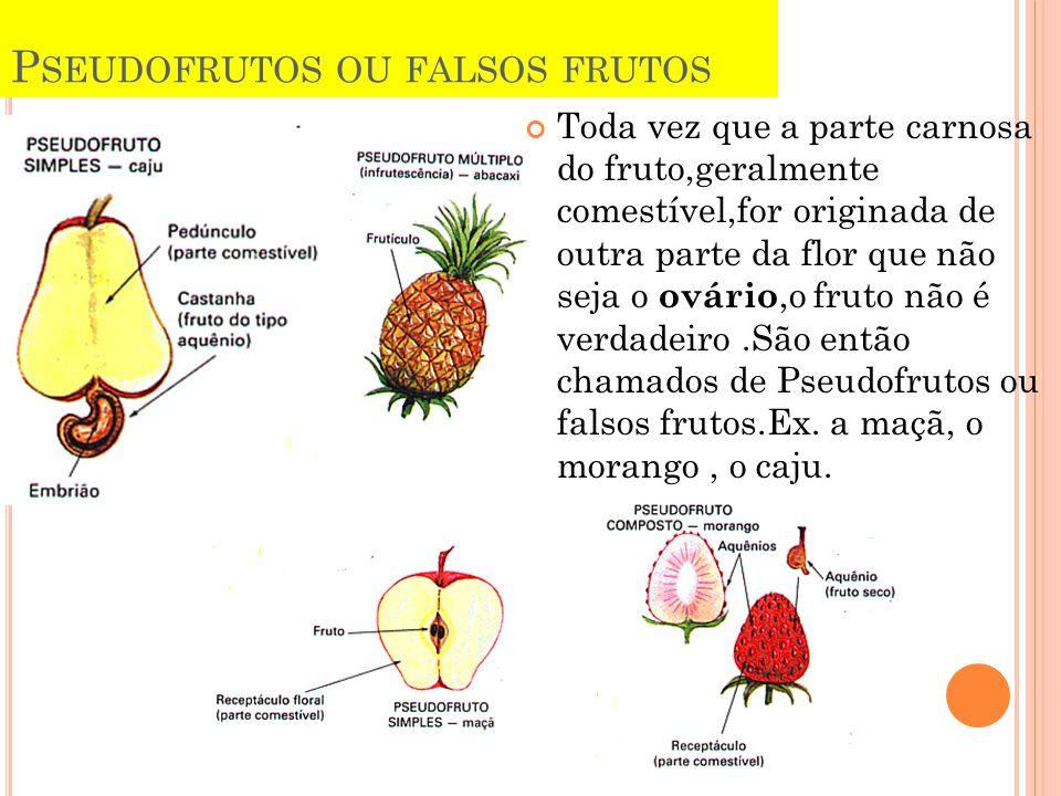 P SEUDOFRUTOS OU FALSOS FRUTOS Toda vez que a parte carnosa do fruto,geralmente comestível,for originada de outra parte da flor que não seja o ovário,