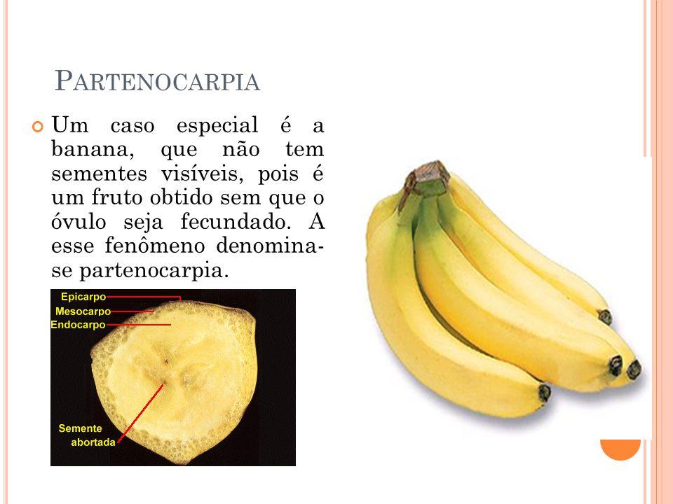 P ARTENOCARPIA Um caso especial é a banana, que não tem sementes visíveis, pois é um fruto obtido sem que o óvulo seja fecundado. A esse fenômeno deno