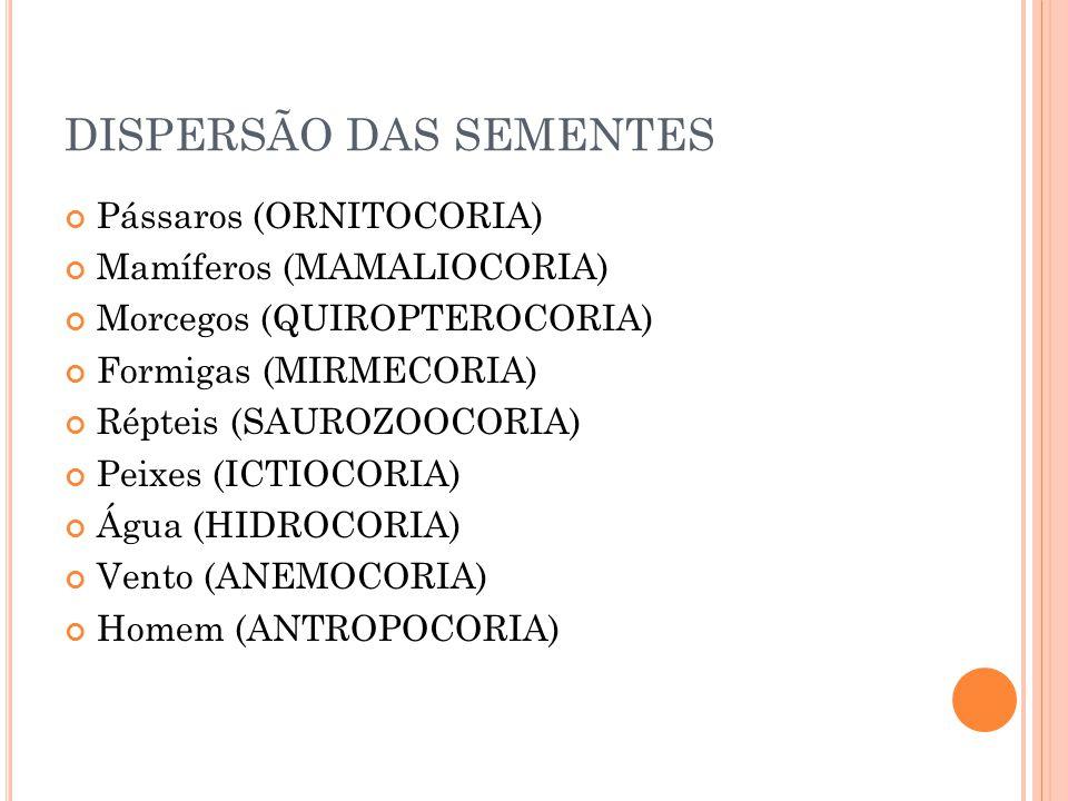 DISPERSÃO DAS SEMENTES Pássaros (ORNITOCORIA) Mamíferos (MAMALIOCORIA) Morcegos (QUIROPTEROCORIA) Formigas (MIRMECORIA) Répteis (SAUROZOOCORIA) Peixes