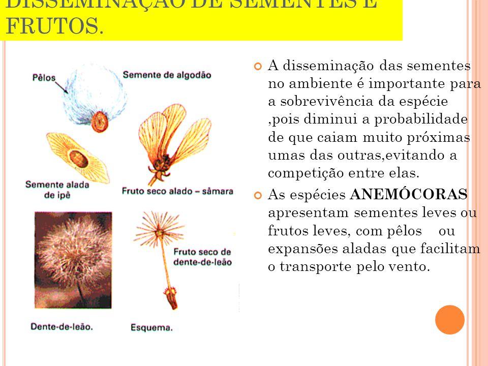 DISSEMINAÇÃO DE SEMENTES E FRUTOS. A disseminação das sementes no ambiente é importante para a sobrevivência da espécie,pois diminui a probabilidade d
