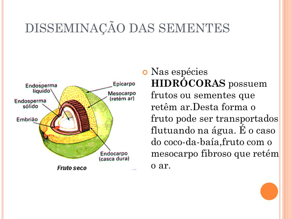 DISSEMINAÇÃO DAS SEMENTES Nas espécies HIDRÓCORAS possuem frutos ou sementes que retêm ar.Desta forma o fruto pode ser transportados flutuando na água