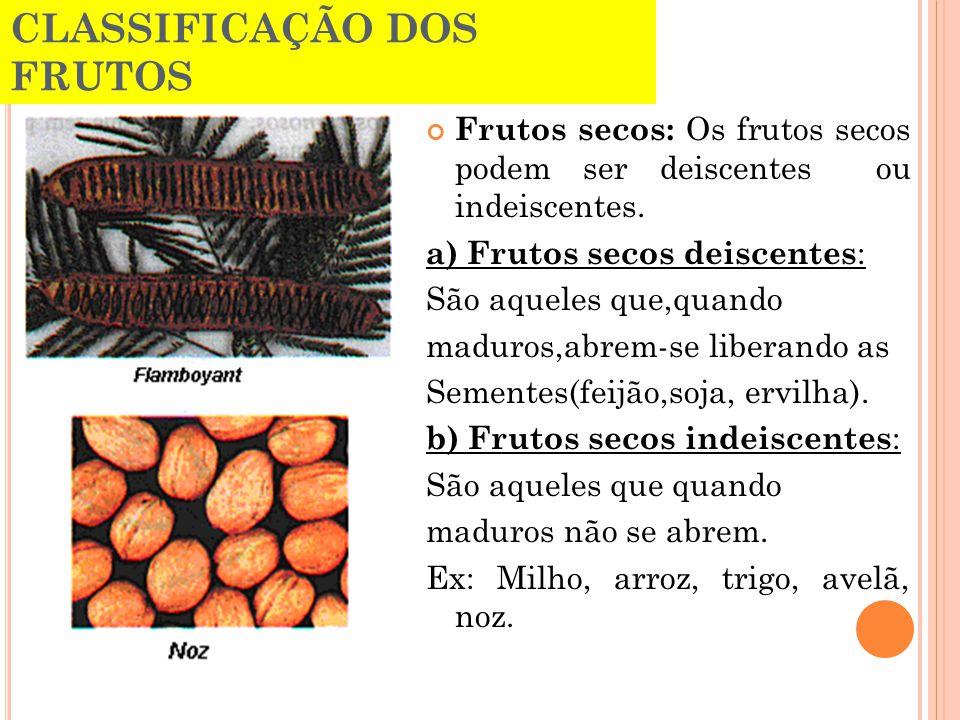 CLASSIFICAÇÃO DOS FRUTOS Frutos secos: Os frutos secos podem ser deiscentes ou indeiscentes. a) Frutos secos deiscentes : São aqueles que,quando madur
